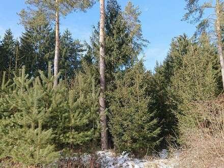 Wald - Dobrowa - 0,74 ha