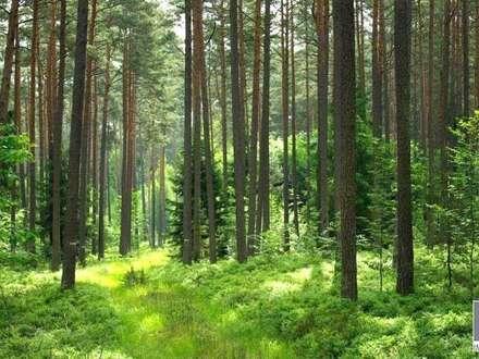 K3: Wald im Steierischen Murtal - mit Schätzwertgutachten - zu verkaufen!