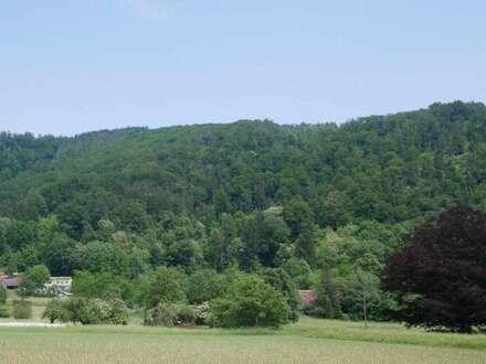 GELEGENHEIT: 5,8 ha Wald nördlich von Graz