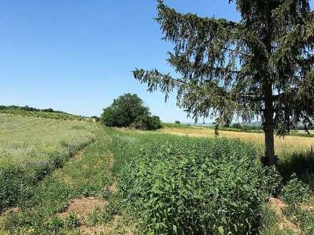 Zur landwirtschaftlichen Nutzung