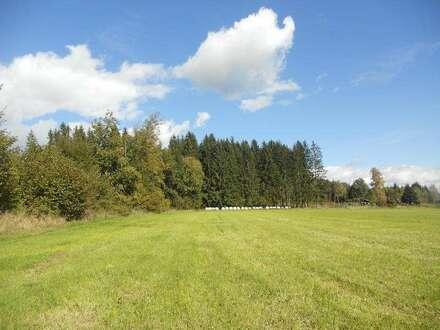 Feldkirchen Nähe-Landwirtschaftliche Fläche/Wiese-ebene Lage, sehr sonnig