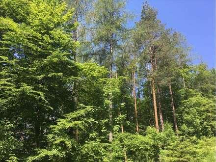 Ferlach: 4,6 ha Wald zu verkaufen!