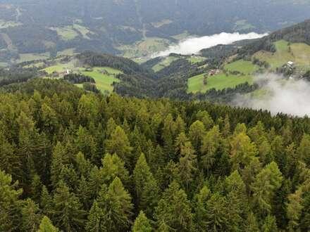 6,5 Hektar Wald in Arriach zu verkaufen.