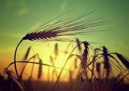 Landwirtschaftl. Hofstelle - Versteigerungsobjekt -
