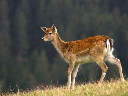 Königswiesen: Wild, Wasser und Wald auf 14 ha