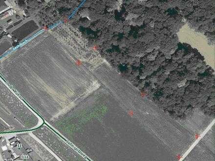 Preissenkung! Landwirtschaftliche Nutzfläche in Wagna/Dorf