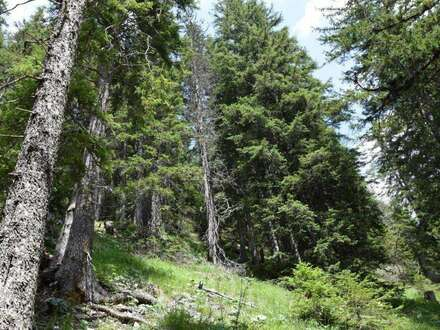 Wald auf der Eggeralm