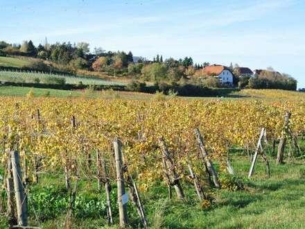 Tolles Einfamilienhaus mit großem Garten und Vollkeller. In unmittelbarer Nähe zu Weingärten und Wäldern