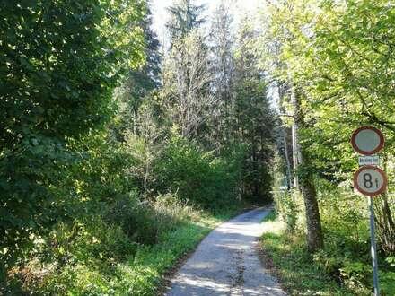 Waldgrundstücke am Rigausbach in Abtenau