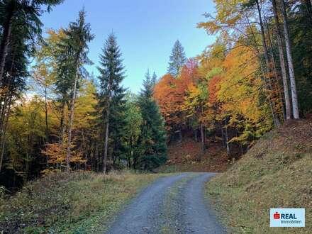 43 ha Forstwirtschaft im Lesachtal