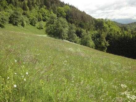 ECHTE ALLEINLAGE: Bauernhof mit 14 ha Grund, in absoluter Ruhelage