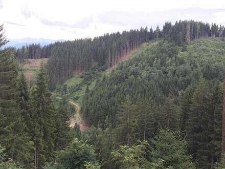10,59 ha Wald in Fohnsdorf