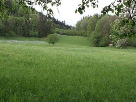 Traditioneller Gastbetrieb mit großem Grundstück