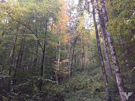 Wald in Bad Goisern