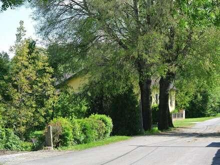 NATUR PUR- Designervilla mit traumhaftem Garten und zwei Stellplätzen! Nähe Korneuburg, Autobahnknoten A5/ S1 und EKZ G3!