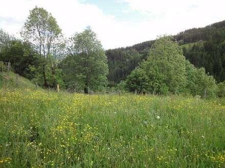 Alter Bauernhof mit 4,1 ha in Alleinlage, echte Ruhelage