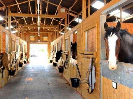 EIN TRAUMLAND FÜR PFERDEFREUNDE mit einer großen Reithalle und 26 Pferdeboxen