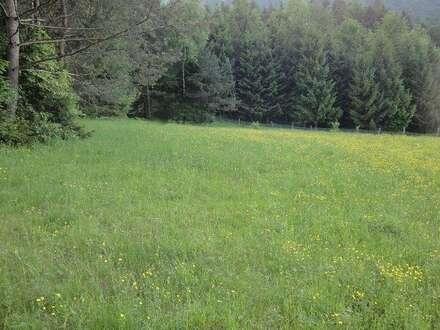 Bauernhof in Alleinlage Feldkirchennähe