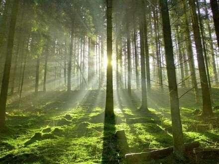 Waldflächen HAUS IM ENNSTAL/SCHLADMING