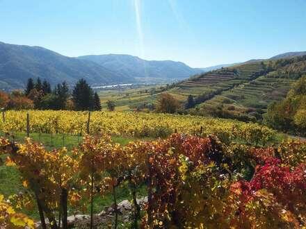 Weingarten im Herzen der Wachau