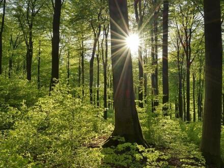 Waldverkauf Kamptal -. Streulage (Waldgrundstücke, Forstflächen)