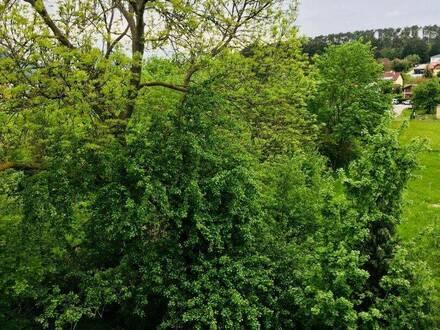 Der Natur so nah! Ab sofort 3-Zimmer-Wohnung in Dreistetten zu verkaufen!!!