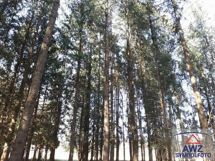 Wunderschöner Wald in LINZ-Lichtenberg, ca. 4,2 Hektar!