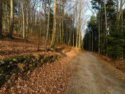 45ha gepflegter Forst mit Grünland im Wienerwald