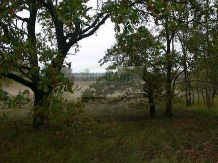*Wald Grundstücke zu verkaufen!*