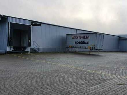 NEUBAU Produktions- / Lagerhalle (ca. 800 m²) in 56751 Polch zu vermieten