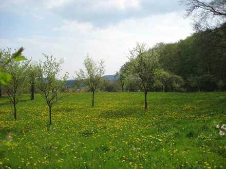 Großes Freizeit-Obstbaumgrundstück altershalber zu verkaufen 4200 qm (ca. 60 x 70 m)