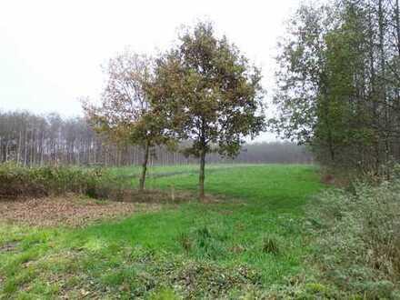 Grundstück - Weidefläche mit Holzhütte in Ovelgönne - Barghorn