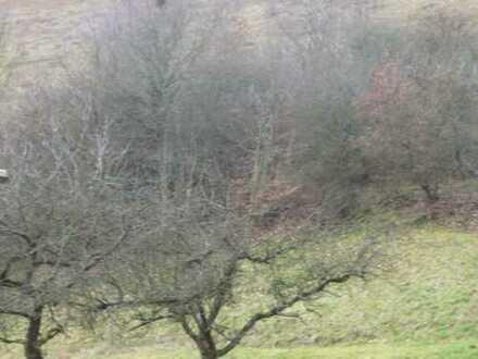 GANESHA-IMMOBILIEN... Wiesen mit Obstbaumbestand zu verkaufen !