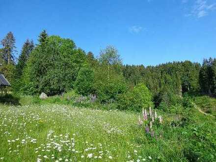 Altbausubstanz mit Bauland für 2-4 Häuser und arrondiertem Wiesengrundstück * insgesamt 9 Hektar *