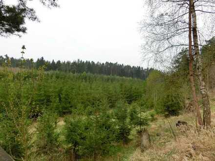 Wald- und Wiesengrundstücke - die Kapitalanlage der Zukunft
