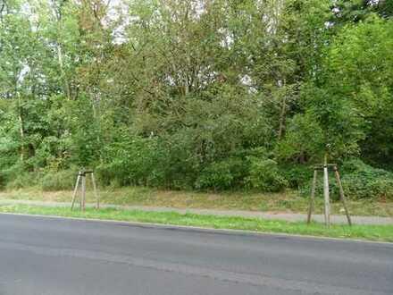 Waldfläche an der B 168 im Landschaftsschutzgebiet