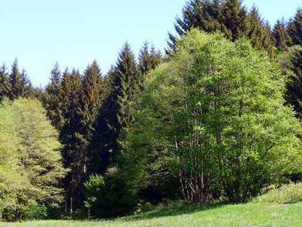 Attraktiver Fichtenwald mit 1,6 ha Fläche in der Gemarkung Motten