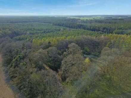 0,6 ha Grün- und Waldfläche (ehemalige Deponie)