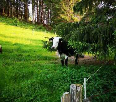 Landleben pur: Schön gelegene, ehemalige Hofstelle zwischen Isny und Kempten