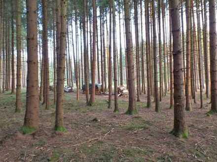 Wald westlich von Eresing