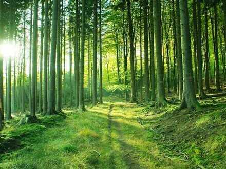 Waldgrundstück in 66280 Sulzbach -Altenwald, Flur 12, Flurstücke 41/395 und 41/984