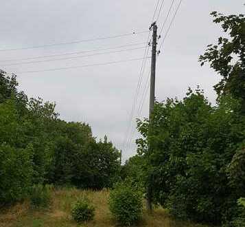 Bauträgerfreies Grundstück in Lebus