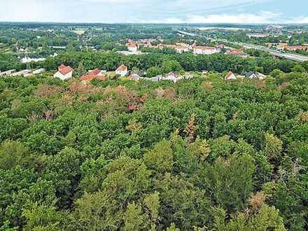 AUKTION: 21 ha Forstliegenschaft bei Berlin