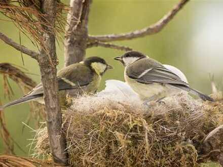 Kleines Nest mit grosser Wirkung