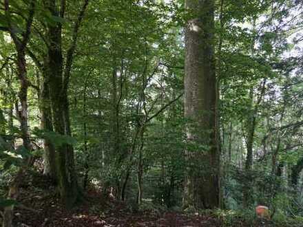Innleitenholz Nähe Stadt Wasserburg am Inn