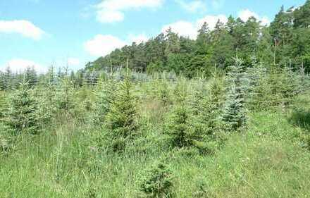Landwirtschaftsfläche (Weihnachtsbaumplantage)