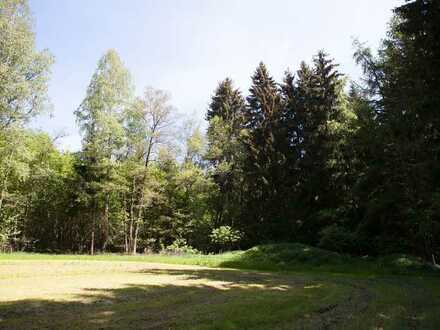 Fünf gesunde Wälder mit reichem Bestand und guter Zufahrt