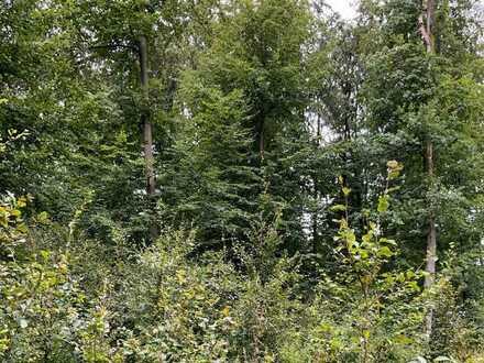 Wald in der Gemarkung Ursheim