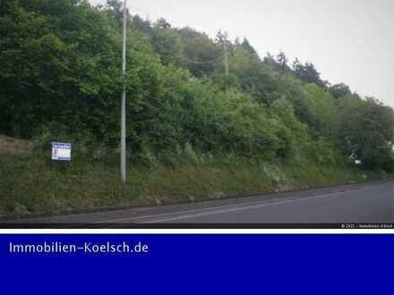Großes Baugrundstück in Odenbach 40 m Straßenlänge