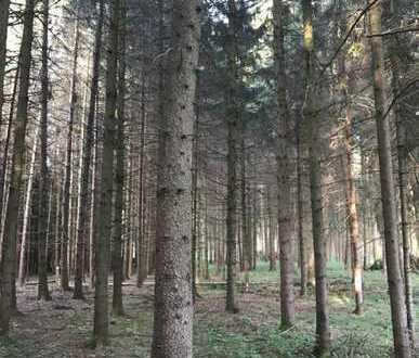 **F.Lidl Immobilien** - Waldgrundstück Nähe Malching am Inn